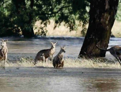 Fires & Floods – Business As Usual for W&S Australia